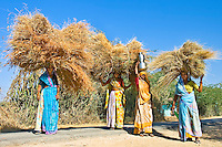 The hay carried by these women contrasts beautifully with the bright blue Indian sky. (Photo by Matt Considine - Images of Asia Collection)