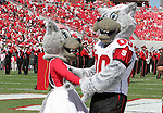 22 September 2007: NC State's mascots Mr. Wuf (r) and Ms. Wuf. The Clemson University Tigers defeated the North Carolina State University Wolfpack 42-20 at Carter-Finley Stadium in Raleigh, North Carolina in an Atlantic Coast Conference NCAA College Football Division I game.