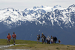 Hikers walk the trails at Hurricane Ridge, a mountainous area in Washington's Olympic National Park. It can be accessed by road from Port Angeles and is open to hiking, skiing, and snowboarding. At an elevation of about 5,200 feet (1,585 m), Hurricane Ridge is a year-round destination. In summer, visitors come for views of the Olympic Mountains, as well as for superb hiking. During the winter months the small, family oriented Hurricane Ridge Ski and Snowboard Area offers lift-serviced downhill skiing and snowboarding. Hurricane Ridge is named for its intense gales and winds. The weather in the Olympic Mountains is unpredictable, and visitors should be prepared for snow at any time of year. Jim Bryant Photo. ©2013. All Rights Reserved.