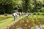Hawaii: Molokai, Halawa Valley, with hike in past taro fields, ancient walls, to waterfalls, guided by Lawrence Aki..Photo himolo222-72404.Photo copyright Lee Foster, www.fostertravel.com, lee@fostertravel.com, 510-549-2202