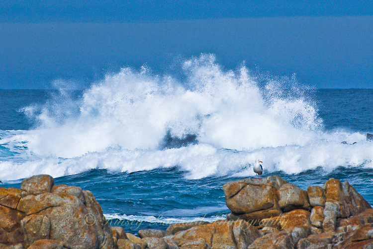 &quot;CALIFORNIA UPRISING&quot;<br />