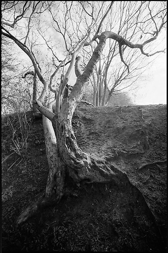 Edition 1/10 – Tree Branches, Thorndon Woodland, Suffolk by Paul Cooklin