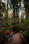 Hikers stroll through the redwoods in Muir Woods National Monument, January 26, 2011.