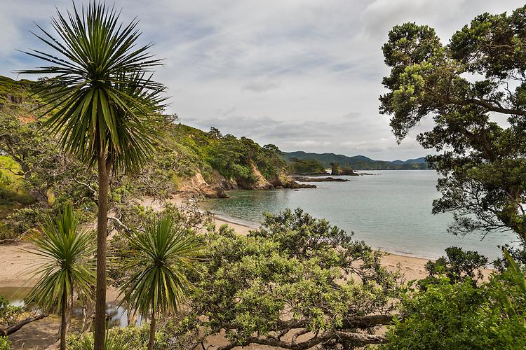 Cabbage trees overlooking Taupiri Bay, Northland, New Zealand - stock photo, canvas, fine art print