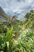 Copland track through alpine vegetation in upper Copland Valley, Westland National Park, West Coast, World Heritage Area, South Westland, New Zealand