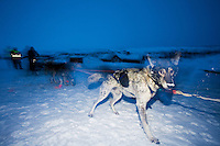 The Finnmarksløpet 2007, 10th - 17th March. At 1000km, this is the longest and northernmost dog sledging race in Europe. .4th placed contestant Ralph Johannessen, arrives at the check point of Joatka.