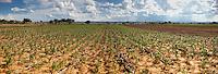 FAO Zambia Selects