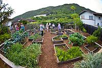 Family and friends enjoying a party in an organic garden in Kalihi