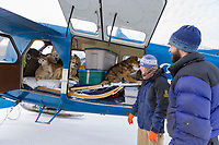 Pilot Dirk Nickisch, Coyote Air bush plane on skis at the Coldfoot airport, Musher loads sled dogs in plane for remote travel to dog mushing camp.