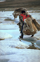 Images from assignment work in Igloolik, Eastern Canadian Artic, in 1985-1986.  Igloolik is an Inuit community with traditional hunting and fishing and a strong sense of self government.