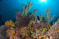 Coral Reef Scenic<br /> Sisters Cave<br /> Isle De Rhonde<br /> Grenadines