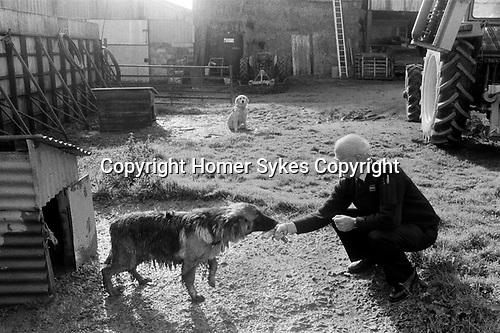 Puppy Farming Wales 1989. A German shepherd chained up and living in terrible condition, with RSPCA inspector.