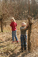 Kinder, Junge und Mädchen schneiden mit einer Astschere Zweige von einer Kopfweide, Weide, Weiden, Salix, Sallow, Willow, Pollard Willow