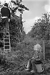 Gypsy family seasonal casual fruit picking Wishbech Cambridgeshire Uk 1977.