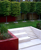 A red Venetian plaster wall terraces the garden into two seperate rooms with a series of white limestone steps leading to back of the garden lined with pleached Hornbeams