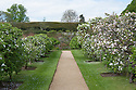 Avenue of espalier fruit trees in the walled garden, Rousham House and Garden.