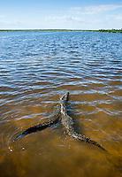 Crocodiles at Punta Sur, Cozumel, Quintana Roo, Mexico