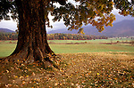 TN: Tennessee Great Smoky Mountains National Park, Mtns, Cades Cove, Fall color          .Photo Copyright: Lee Foster, lee@fostertravel.com, www.fostertravel.com, (510) 549-2202.Image: tnsmok214