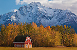 A colony barn left over from Matanuska Valley settlers who came here during FDR's new deal in the 1930's, sits at the foot of Pioneer Peak, near Palmer, Alaska.
