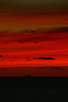 A red sky sunset over Cottesloe beach.