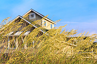 Nags Head style cottage seen through the seaoats.