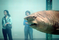 """""""The Physical Impossibility of Death in the Mind of Someone Living"""" by Damien Hirst at the Brooklyn Museum Sensation show on September 30, 1999. The sculpture consists of a tiger shark pickled in formadehyde in a tank. (© Richard B. Levine)"""