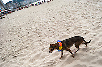 A dog, wearing a fancy costume, walks on the beach during the Blocao pet carnival show at Copacabana beach in Rio de Janeiro, Brazil, 12 February 2012.