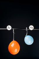 HELIUM AND ARGON FILLED BALLOONS<br /> (Variations Available)<br /> The Two Balloons Are Filled To The Same Volume<br /> After 12.5 hours the helium filled balloon is smaller than the Argon filled balloon. Helium effuses out of the balloon faster than Argon.  Light atoms or molecules effuse through the pores of the balloons faster than heavy atoms or molecules.