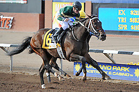 Daddy Nose Best (no. 6), ridden by Julien Leparoux and trained by Steve Asmussen, wins the 10th running of the grade 3 Sunland Derby for three year olds on March 25, 2012 at Sunland Park Racetrack in Sunland Park, New Mexico.  (Bob Mayberger/Eclipse Sportswire)
