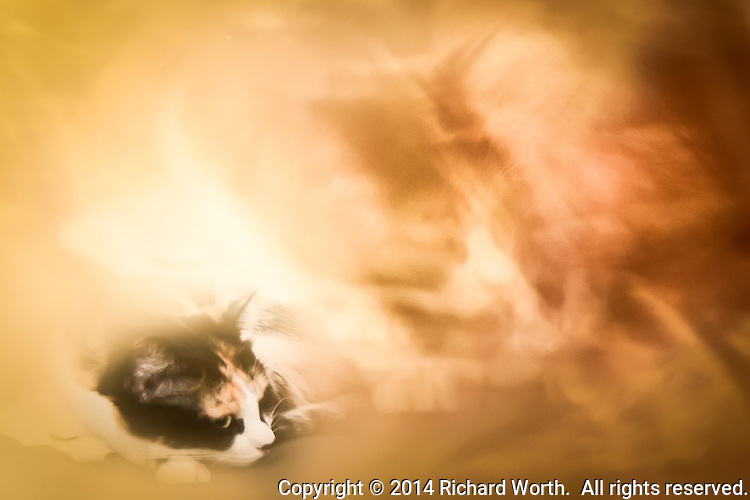 Two pictures blended to create an ethereal image:   A calico cat is surrounded in the soft, delicate, ethereal dream of itself.