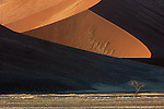Light and shadow play across sand dunes, Namib Desert