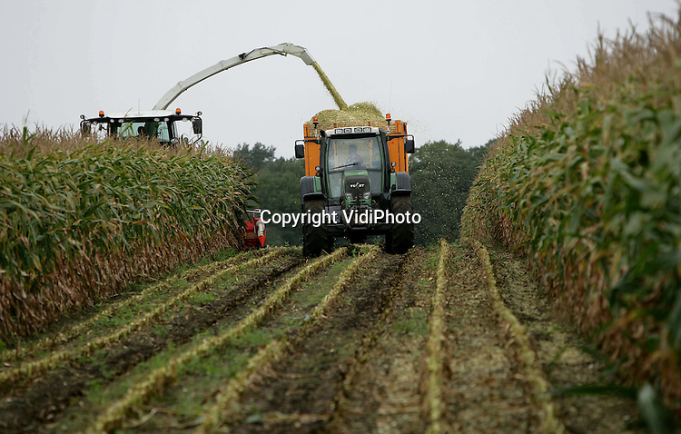 Foto: VidiPhoto..RENKUM - Loonwerker Gerritsen uit Renkum is donderdag op zijn 2,5 hectare grote akker als een van de eerste in Nederland begonnen met het kneuzen van de maïs. De oogst is eerder dan andere jaren. Door het droge en warme weer van de laatste weken zijn de maïskorrels snel gerijpt. De maïs is bestemd als veevoer voor eeh kalvermester uit Kesteren.