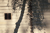 Tree shadows on a wooden vernacular house from. Naruja, Vrancea. Built C19. Dimitrie Gusti National Village Museum (Muzeul Satului) in Bucharest, Romania