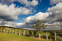 South Burgenland vineyards, Rechnitz, Austria