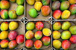 Mangos for sale at the Lincoln Road Farmers' Market in Miami Beach, Florida.