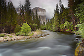 Merced River with El Capitan looming in the distance in the  spring, Yosemite National Park, California, SA.