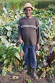 Older man on his allotment. MR