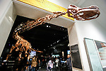 122-foot-long Titanosaur Unveiled At Museum Of Natural History