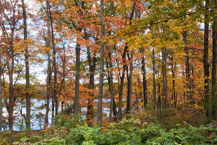 Tree fall autumn foliage with lake water in background