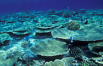 Maldives, atolls, islands, tropics, sea life, fish life, holiday, lifestyle, Indian Ocean, blue sky, lagoon, coral reefs