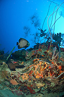 Underwater scenics at Cane Bay wall<br /> St. Croix, US Virgin Islands