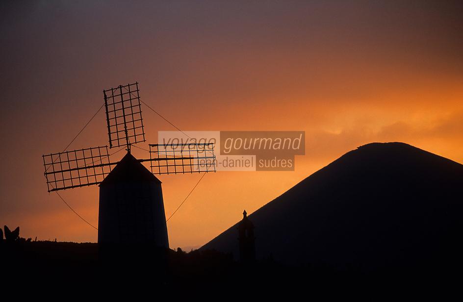 Europe/Espagne/Canaries/Lanzarote/Guatiza : Le jardin de cactus conçu par Cesar Manrique - Le moulin à vent au soleil couchant