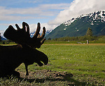 Alaska Mammals & Other