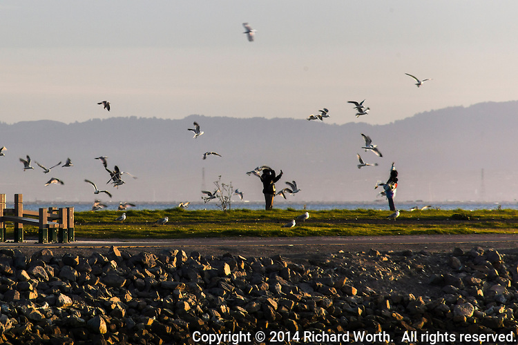 Tossing 'people food' to the gulls is fun, but it is bad for the gulls.