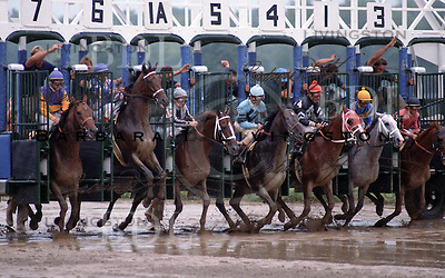 Lady's Secret (Secretariat), Pat Day up.  1986 Whitney start.  King's Wan #6, leaping, Fuzzy to his inside, Ends Well on rail - 1986 at Saratoga Race Course
