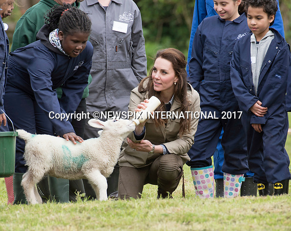 03.05.2017; Gloucester, UK: DUCHESS OF CAMBRIDGE FEEDS STINKY THE LAMB<br />Kate Middleton was given a little run around by the lamb called &ldquo;Stinky&rdquo; when she fed it a bottle of milk.<br /> The Duchess was visiting a Farm for City Children in Arlingham, to see their work giving young people from inner cities the chance to spend a week on a real working farm.<br /> The charity offers urban children from all over the country a unique opportunity to live and work together for a week at a time on a real farm in the heart of the countryside. It is an intense, &lsquo;learning through doing&rsquo; experience of a different life &ndash; for children who may not know where their food comes from and have limited opportunities to explore the outside world.<br />Mandatory Photo Credit: &copy;Francis Dias/NEWSPIX INTERNATIONAL<br /><br />IMMEDIATE CONFIRMATION OF USAGE REQUIRED:<br />Newspix International, 31 Chinnery Hill, Bishop's Stortford, ENGLAND CM23 3PS<br />Tel:+441279 324672  ; Fax: +441279656877<br />Mobile:  07775681153<br />e-mail: info@newspixinternational.co.uk<br />Usage Implies Acceptance of OUr Terms &amp; Conditions<br />Please refer to usage terms. All Fees Payable To Newspix International
