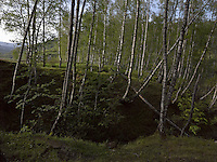 FOREST_LOCATION_90064