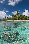 Toau Atoll, Tuamotu Archipelago, French Polynesia; an over under view of turquoise blue water and coral heads in the shallows along the shores of a palm tree covered island