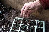 Starting Plants from Seeds Stock Photos