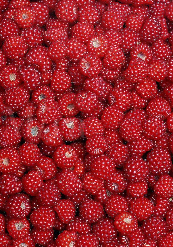 Detail of Wineberries, Rubus phoenicolasius